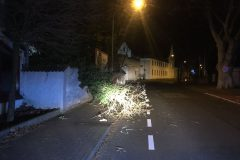 Umgestürzter Baum in der Innenstadt