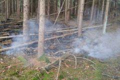 Brennender Waldboden