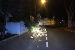Orkan Sabine - Umgestürzter Baum