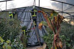 Provisorische Maßnahmen zum Schutz der hochwertigen Pflanzen