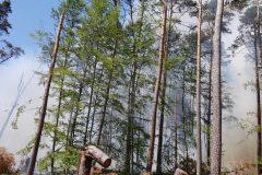 Rauchentwicklung im Wald