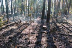 Rauchender Waldboden