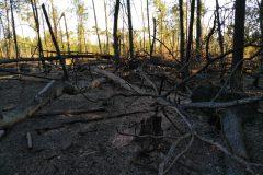 Verkohlter Waldboden