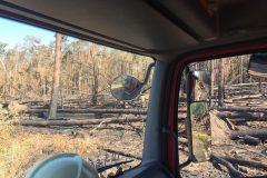 Durch Feuer zerstörter Waldbereich