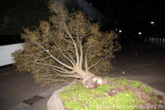2020-E017 Baum Häfnerweg