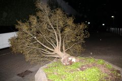 Orkan Sabine - Umgestürzter Baum versperrt Straße