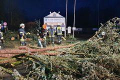 Orkan Sabine - Mehrere Bäume in Alter Mainzer Landstraße
