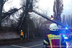 2020-E032 Ketteler Baum