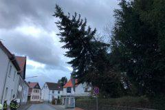 Orkan Sabine - Baum in Schräglage (Ringstraße)