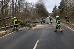 Orkan Sabine - Umgestürzter Baum auf L 3094