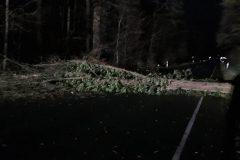 Orkan Sabine - Baum auf K 128 umgestürzt