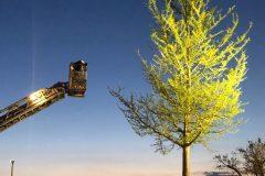 Baum wird über Drehleiter angefahren